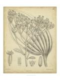 Vintage Curtis Botanical VI Kunstdrucke von Samuel Curtis