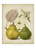 Harvest Pears I Posters by Heinrich Pfeiffer
