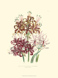 Lily Garden III Posters by Jane W. Loudon