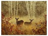 Foggy Deer Giclee-tryk i høj kvalitet af Chris Vest