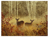 Foggy Deer Print by Chris Vest