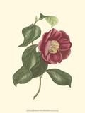 Camellia Blooms II Art by J.J. Jung