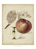 Harvest Apples II Giclee Print by Heinrich Pfeiffer