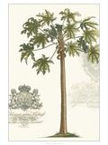 Non-embellished Palm Fresco IV Giclée-Premiumdruck von  Vision Studio