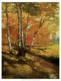 Woodland Stream I Giclee Print by Graham Reynolds