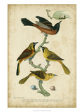 Wilson's Orchard Oriole Giclee Print by Alexander Wilson