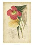 Curtis Tropical Blooms I Plakater af Samuel Curtis