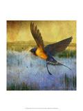 Barnswallow Reproduction giclée Premium par Chris Vest