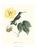 Hummingbird and Bloom I Posters by  Mulsant & Verreaux