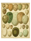 Vintage Bird Eggs II Affiches