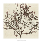 Brilliant Seaweed II Prints by  Vision Studio