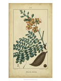 Vintage Turpin Botanical VI Posters by  Turpin