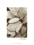 Garden Textures II Posters by Laura Denardo