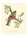 Nature Jardin I Prints by L. Curmer