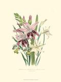 Lily Garden II Prints by Jane W. Loudon