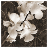 Orchid and Swirls I Posters by Christine Zalewski