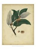 Engelmann Botanical VIII Prints by  Engelmann