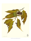 Chestnut Tree Giclee Print by James Linton Sain