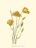 Delicate Wildflowers I Prints