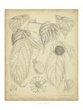 Vintage Curtis Botanical III Kunstdruck von Samuel Curtis