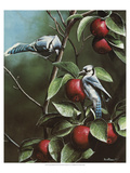 Summer Blue Jays Giclee Print by Kevin Daniel