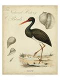 Heron Anthology I Affiche