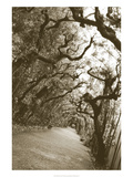 Boboli Arbor, Italy Giclee Print by Meg Mccomb