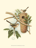 Titmouse & Nest Reproduction giclée Premium