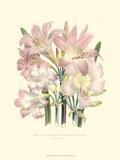 Lily Garden IV Prints by Jane W. Loudon