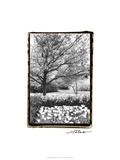 Springtime Garden III Reproduction giclée Premium par Laura Denardo