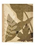 Pressed Leaf Assemblage I Posters