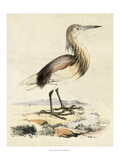 Antique Heron I Posters