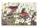 Painted Bunting Prints by Al Dornish