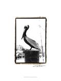 Pelican Perch Prints by Laura Denardo
