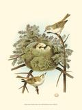 Prairie Warbler & Nest Reproduction giclée Premium