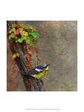 Magnolia Warbler Affiches par Chris Vest
