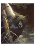 Bear Portrait Premium Giclee Print by Leo Stans