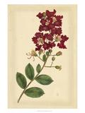 Floral Varieties II Posters by Samuel Curtis
