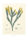 Luminous Seaweed I Giclee Print by Henry Bradbury