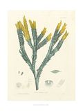 Luminous Seaweed I Posters by Henry Bradbury