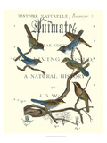 Non Embellish Vintage Ornithology II Prints by  Vision Studio