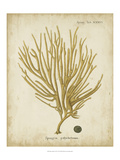 Esper Antique Coral IV Reproduction procédé giclée par Johann Esper