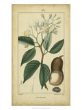 Vintage Turpin Botanical I Prints by  Turpin