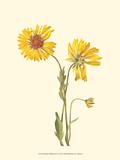 Delicate Wildflowers II Poster