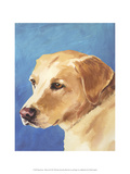 Dog Portrait, Yellow Lab Prints by Jill Sands