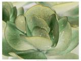 Petal I Premium Giclee Print by Tang Ling