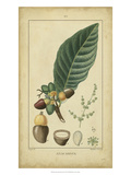 Vintage Turpin Botanical IV Posters by  Turpin