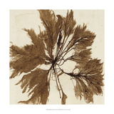 Brilliant Seaweed VI Poster