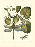 Dragonfly Medley I Posters