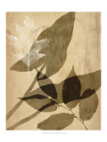 Pressed Leaf Assemblage II Prints